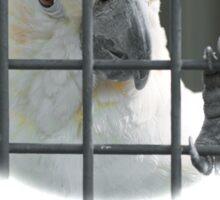Orangenhauben-Kakadu hinter Gittern Sticker