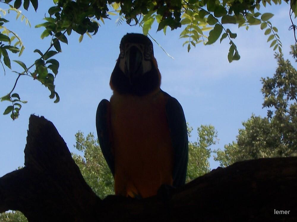 bird silhouette by lemer