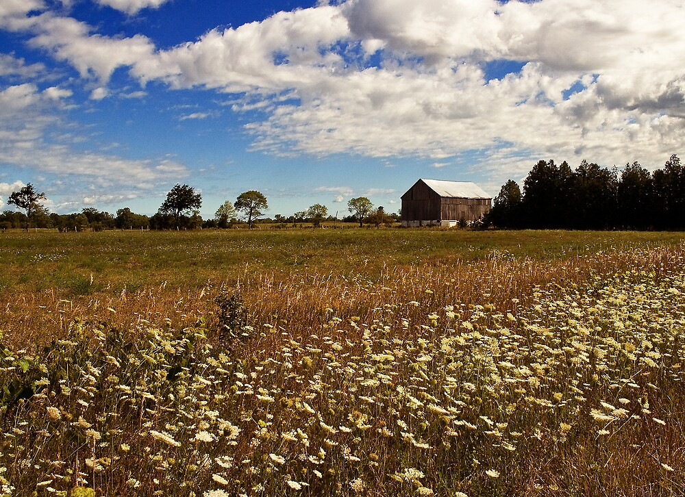 Field of Gold by ajnphotography