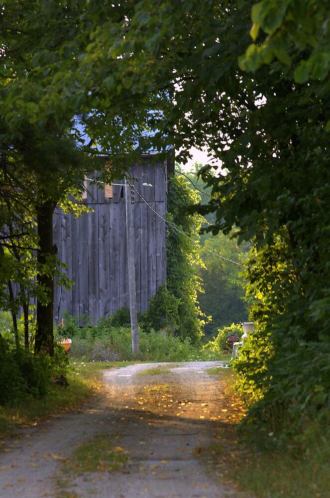 Sunlit Lane by ajnphotography