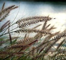 River Grass by anthony1957