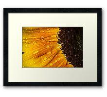 Sunflower 7 Framed Print