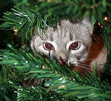 Christmas Tree Kitten by Bree Tipton