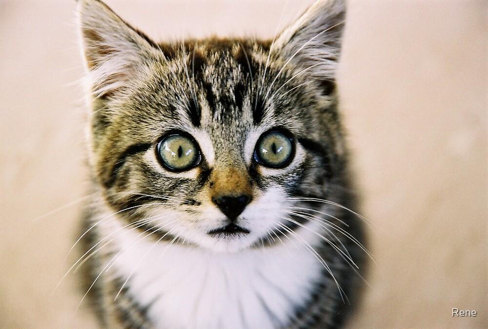 Kitty by Rene