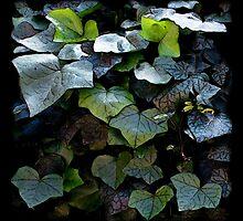 Ivy by Robert Meyer
