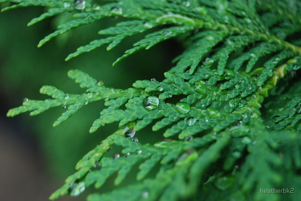 drops of green by Heather Brink