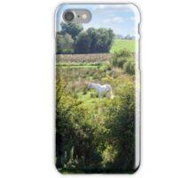 lone horse feeding iPhone Case/Skin