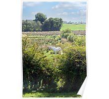 lone horse feeding Poster