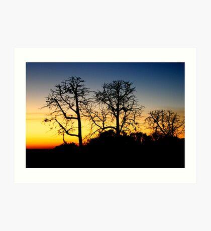 Kakadu Sunset Art Print