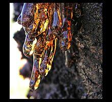 sapfluid #1 by webgrrl