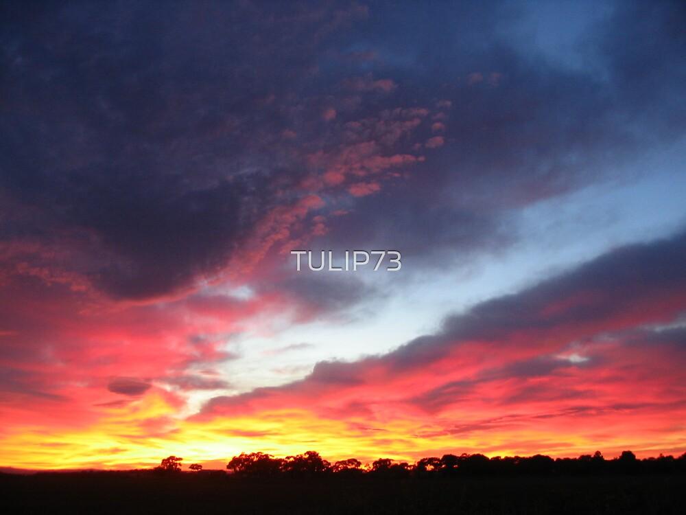 FIRE SKY by TULIP73