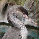 Cormorant by Melanie PATRICK