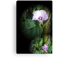 Big And Small Purple In The World Of Greens Canvas Print