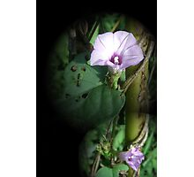 Big And Small Purple In The World Of Greens Photographic Print