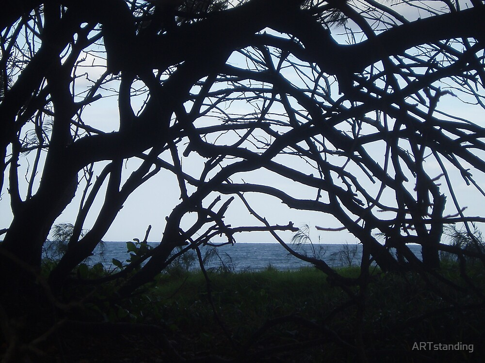 Through the Branches by ARTstanding