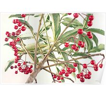 Christmas Berry Poster