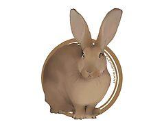 Flemish Giant Rabbit (plain) by liarakcrane
