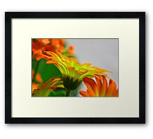 Light Bulb Flower Framed Print