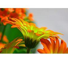 Light Bulb Flower Photographic Print