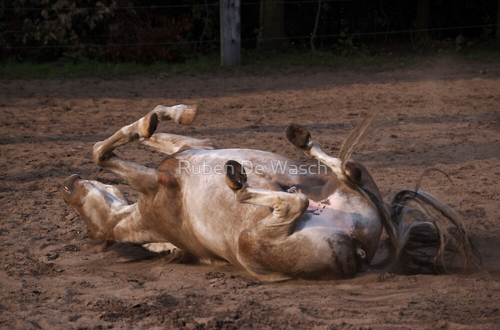Rolling Horse by Ruben De Wasch