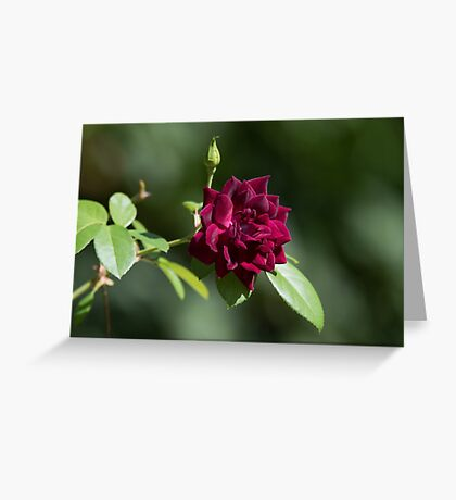 Rich Rose Greeting Card
