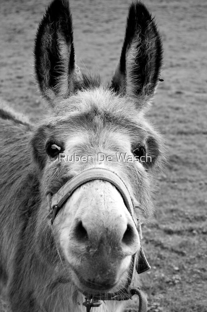 Mule by Ruben De Wasch