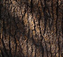 Bark by Alex Smith