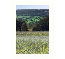 Swan Valley Winery Art Print