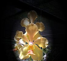 Yellow Orchids by Carlo Cesar Rodillas