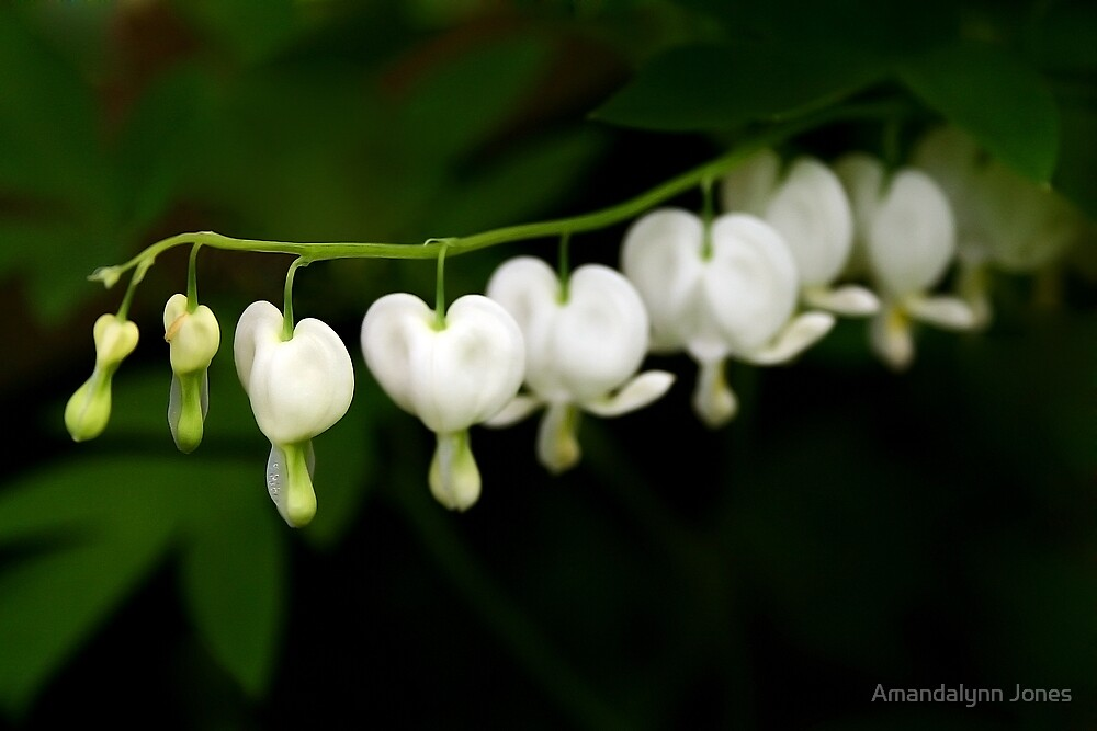 Bleeding Hearts by Amandalynn Jones
