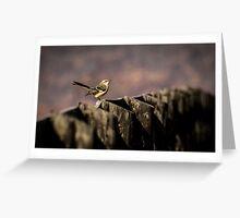 Songbird Greeting Card