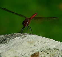 Dragonfly2 by James Summers