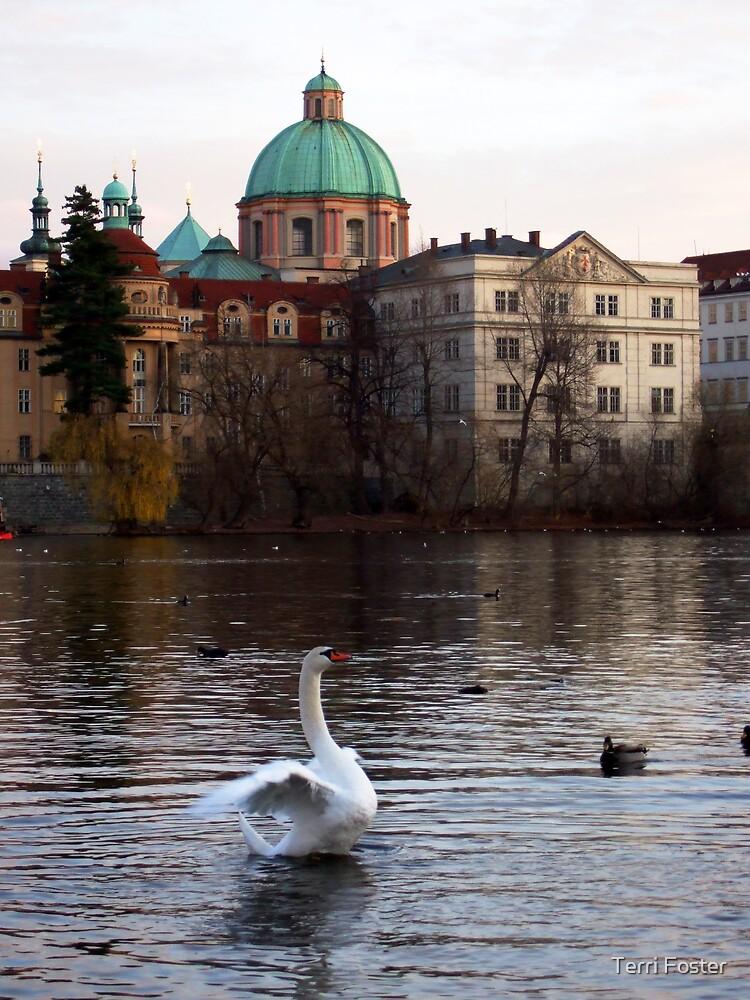 Swan in Prague by Terri Foster