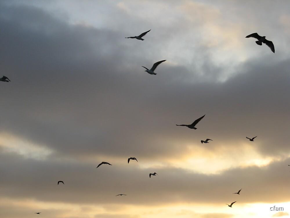 Birds in Flight by cfam