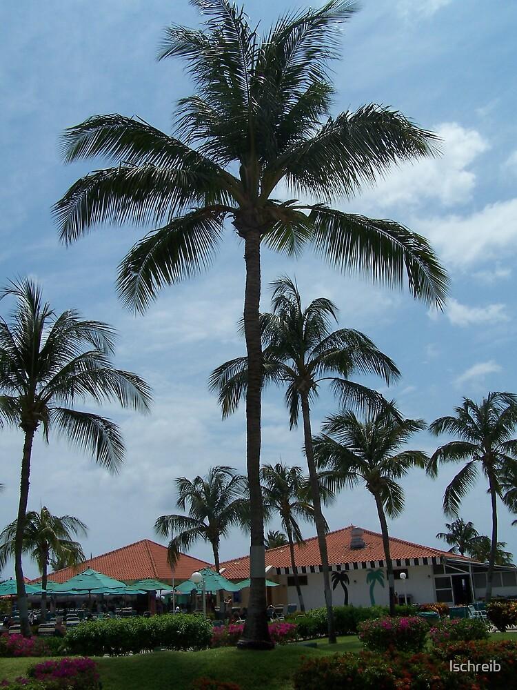 Palm Tree by lschreib