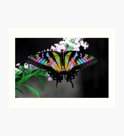 Multi-Colored Butterfly Art Print