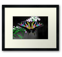 Multi-Colored Butterfly Framed Print