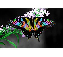 Multi-Colored Butterfly Photographic Print
