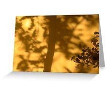 Sun Through Shade Greeting Card