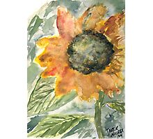 Rustic Sunflower Photographic Print
