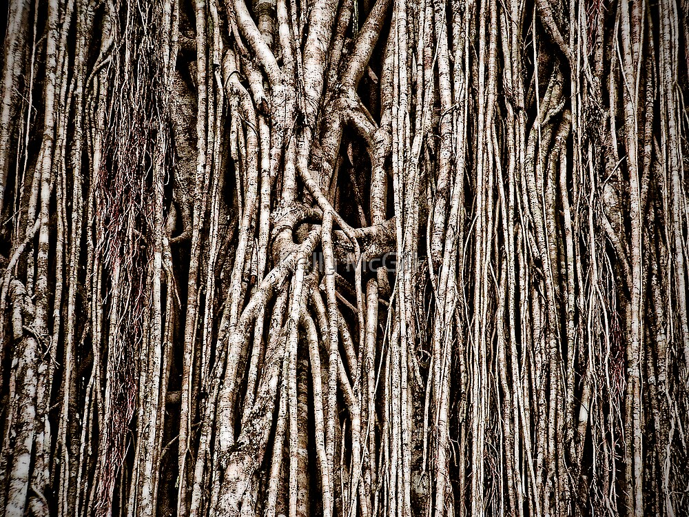 Natures Barcode by Kelly McGill