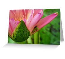 Hiding Tree Frogs Greeting Card