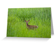 baby dear  Greeting Card