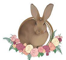 Flemish Giant Rabbit by liarakcrane