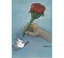 Rose and pigeon Photographic Print