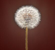 Make a wish by Teresa Gaudio