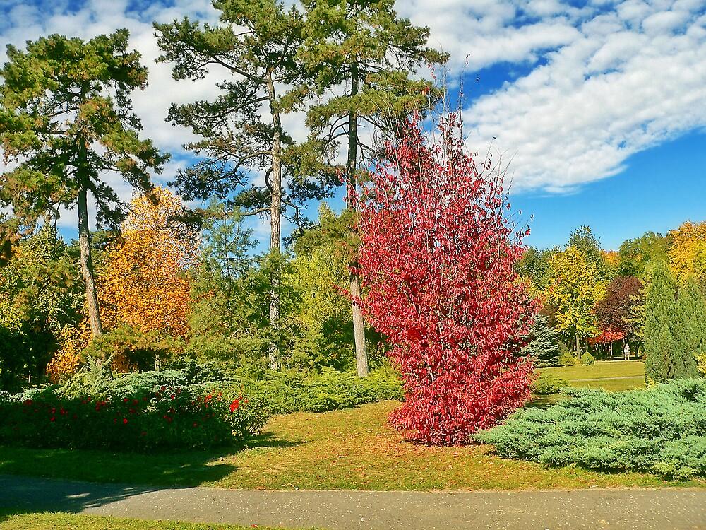 Timisoara in colours XI by GabiB