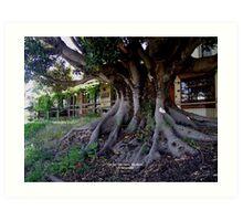 photoj South Australia, Adelaide Hills Art Print