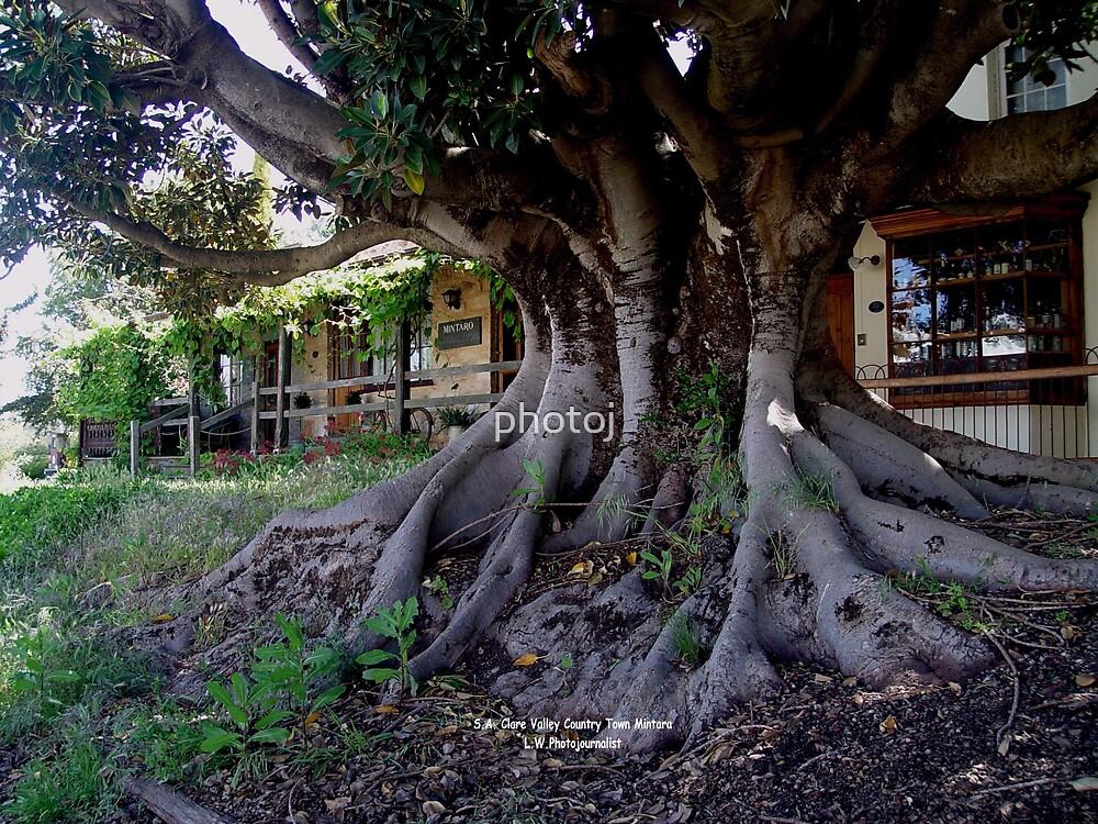 photoj South Australia, Adelaide Hills by photoj