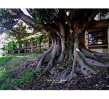 photoj South Australia, Adelaide Hills Photographic Print
